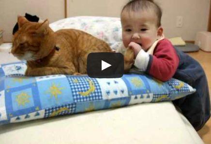 赤ちゃん面白動画集